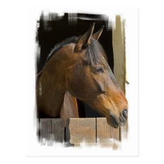 Thoroughbred Horses Postcard