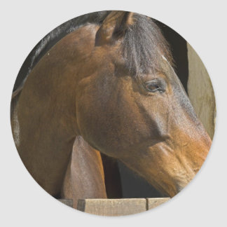 Thoroughbred Horses Stickers