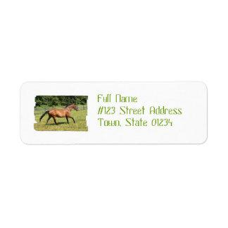 Thoroughbred in a Field Custom Return Address Label