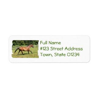 Thoroughbred in a Field Custom Return Address Labels