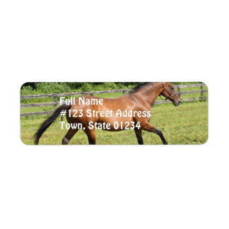 Thoroughbred in a Field Return Address Label