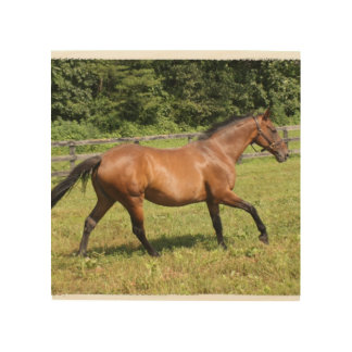 Thoroughbred in a Field Wood Prints