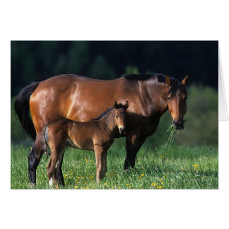 Thoroughbred Mare & Foal 1 Card