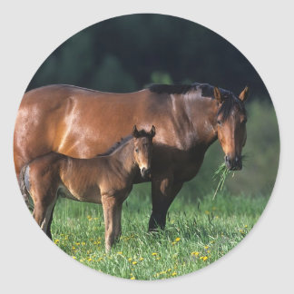 Thoroughbred Mare & Foal 1 Classic Round Sticker
