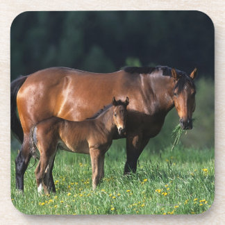 Thoroughbred Mare & Foal 1 Coaster