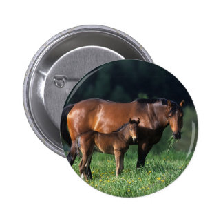 Thoroughbred Mare & Foal 1 Pinback Button