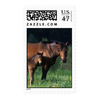 Thoroughbred Mare & Foal 1 Postage