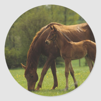 Thoroughbred Mare & Foal 2 Classic Round Sticker