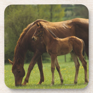 Thoroughbred Mare & Foal 2 Drink Coaster