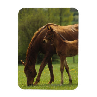 Thoroughbred Mare & Foal 2 Magnet