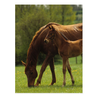 Thoroughbred Mare & Foal 2 Postcard