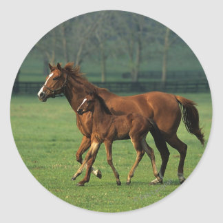 Thoroughbred Mare & Foal 3 Classic Round Sticker