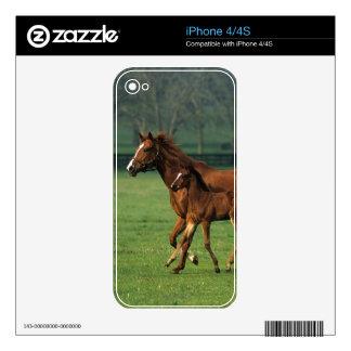 Thoroughbred Mare & Foal 3 iPhone 4 Skin