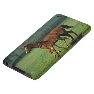 Thoroughbred Mare & Foal 3 iPod Touch Case-Mate Case