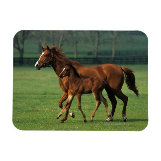 Thoroughbred Mare & Foal 3 Magnet