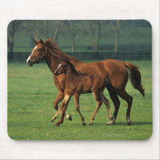 Thoroughbred Mare & Foal 3 Mouse Pad