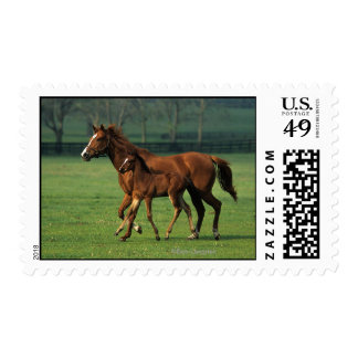 Thoroughbred Mare & Foal 3 Postage Stamp