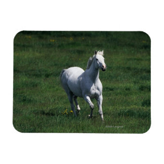 Thoroughbred Mare Magnet