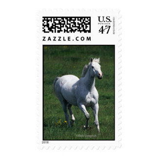 Thoroughbred Mare Stamp