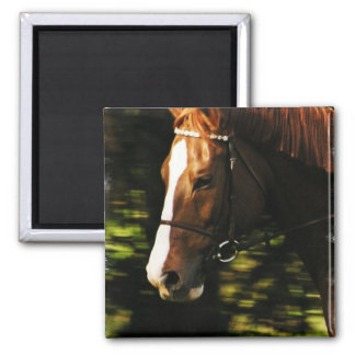 Thoroughbred Mount Magnet Refrigerator Magnets