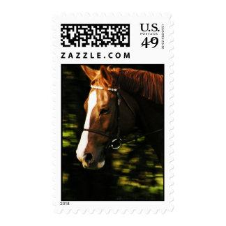 Thoroughbred Mount Postage Stamp