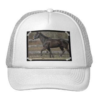 Thoroughbred Prancing Baseball Hat