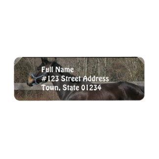 Thoroughbred Prancing Mailing Label Return Address Label