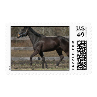 Thoroughbred Prancing Postage Stamp