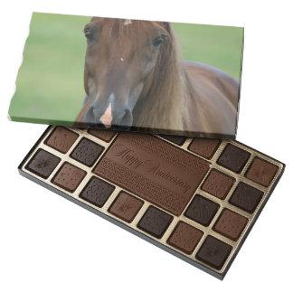 Thoroughbred Race Horse 45 Piece Box Of Chocolates