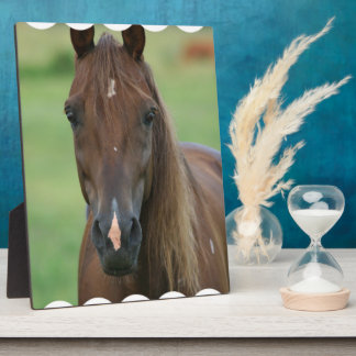 Thoroughbred Race Horse Plaque