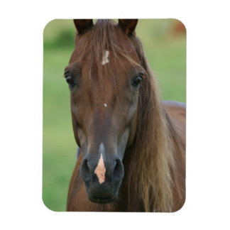 Thoroughbred Race Horse Premium Magnet Magnets