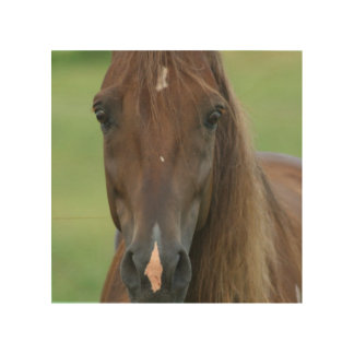 Thoroughbred Race Horse Wood Canvas