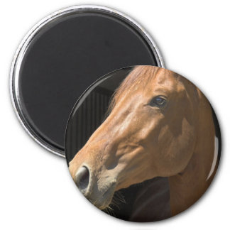 Thoroughbred Round Magnet Fridge Magnets