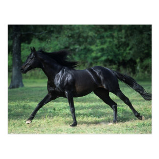 Thoroughbred Running Postcard