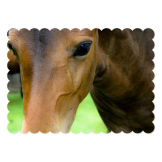 Thoroughbred Selections 5x7 Paper Invitation Card