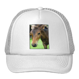 Thoroughbred Selections Baseball Hat
