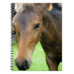 Thoroughbred Selections Notebook