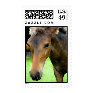 Thoroughbred Selections Postage Stamp