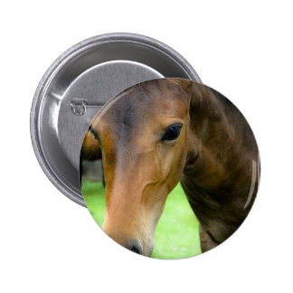 Thoroughbred Selections Round Button