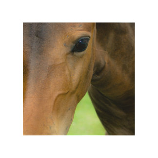 Thoroughbred Selections Wood Canvas