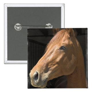 Thoroughbred Square Pin
