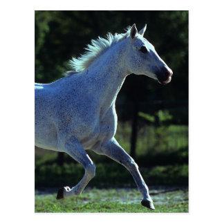 Thoroughbred Stallion Running Postcard