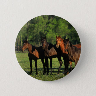 Thoroughbred Yearlings Button