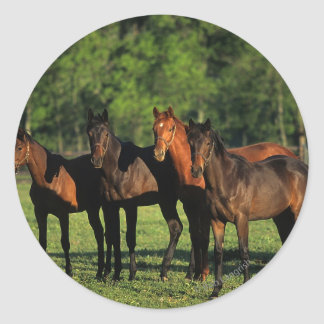Thoroughbred Yearlings Classic Round Sticker