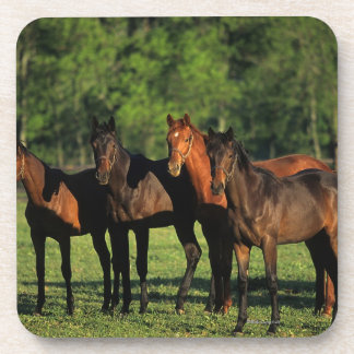 Thoroughbred Yearlings Coaster