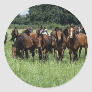 Thoroughbred Youngsters Classic Round Sticker