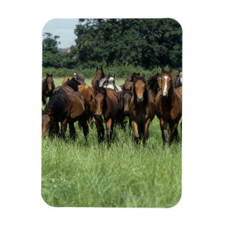 Thoroughbred Youngsters Magnet