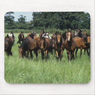 Thoroughbred Youngsters Mouse Pad