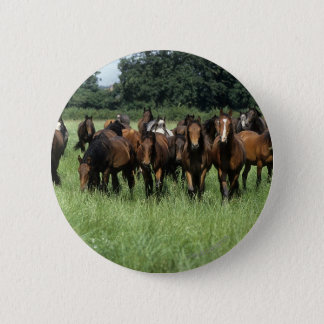 Thoroughbred Youngsters Pinback Button