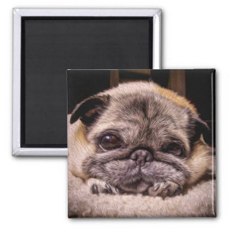 Those Pug Eyes (Digital Painting) 2 Inch Square Magnet